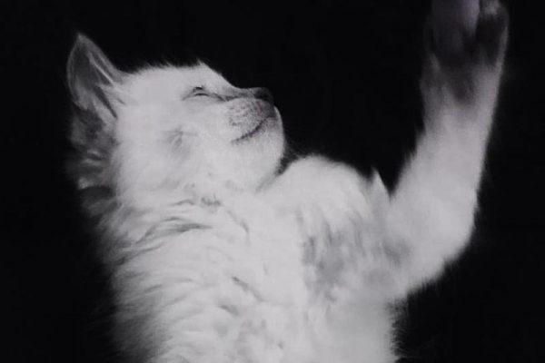 How My Childhood Cat Ruined My Dream of Children